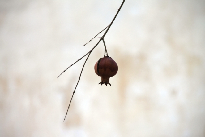 """Pomegranate"" © Klearchos Kapoutsis, 2010. CC BY 2.0."
