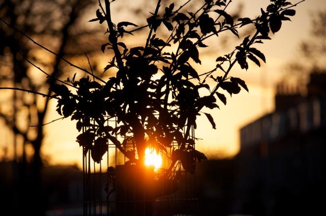 """Sunset"" © Paul Rysz, 2013. CC BY 2.0."