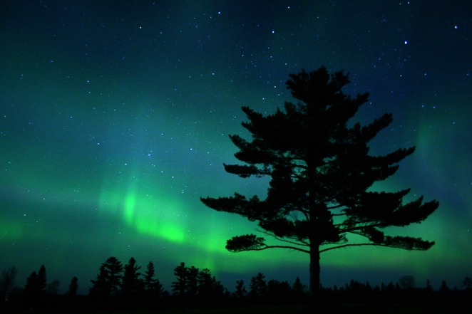 """White-Pine-Aurora"" © Charlie Stinchcomb, 2005. CC BY 2.0."