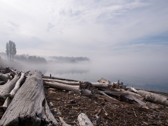 """Morning Fog on a Puget Sound Beach"" © Ingrid Taylarg, 2010. CC BY 2.0."