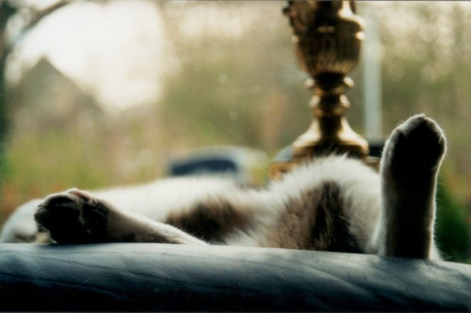 """sleeping cat"" © pmin00o, 2001. CC BY-ND 2.0."
